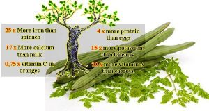 Read more about the article The Miracle Tree That Could Treat Many Serious Diseases