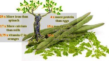 The Miracle Tree Moringa