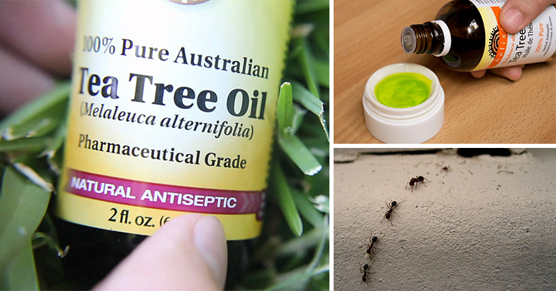 You are currently viewing 5 Tea Tree Oil Uses Most People Have No Idea About