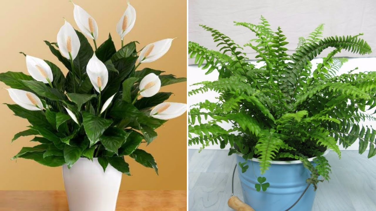 Plants That Can Eliminate The Indoor Humidity And Save You From Allergies And Asthma