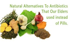 Natural Antibiotics That Our Elders Used Instead Of Pills