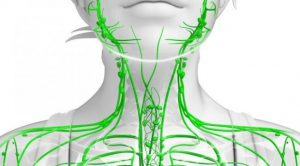 Read more about the article Signs of a Clogged Lymphatic System and 10 Ways to Cleanse It