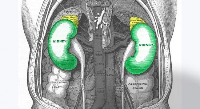 Top 10 Deadly Habits Seriously Damaging Your Kidneys