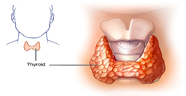 You are currently viewing You Will Never Hear This From Your Doctor: How To Cure Your Thyroid Gland With Just Two Ingredients!